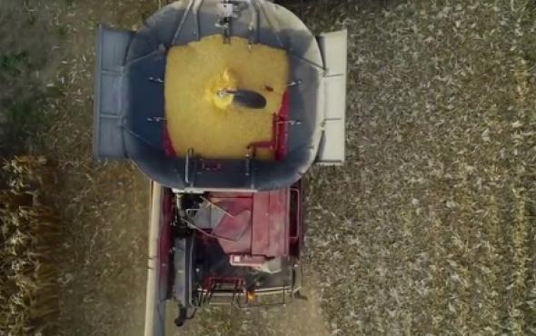 卓收ballbet网页版DragoGT玉米割台国外收获视频赏析