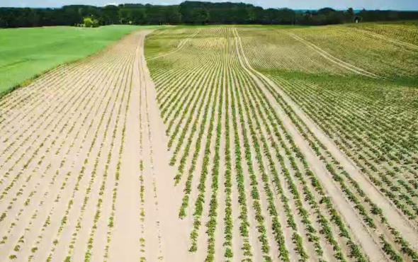 格立莫土豆播种机宣传视频