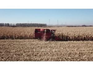 天津勇猛机械4YZ-5A型玉米收获机黑龙江作业视频