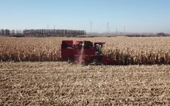 天津勇猛機械4YZ-5A型玉米收獲機黑龍江作業視頻