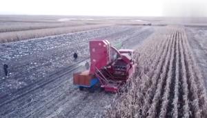 勇猛4YZQS-4B穗茎兼收玉米收获机作业视频