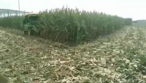 一收4YZH-2玉米收获机作业视频