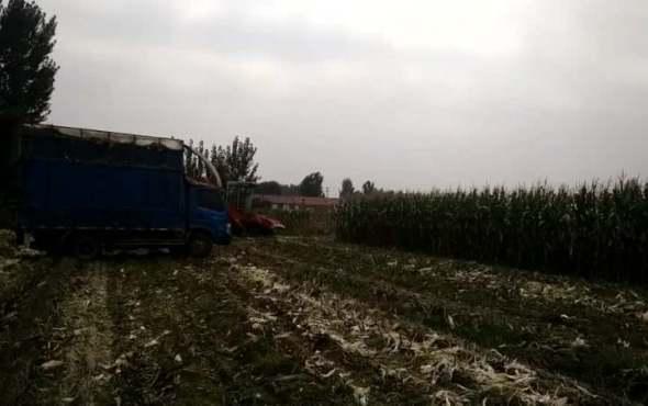 唐山利军机械茎穗兼收玉米收割机