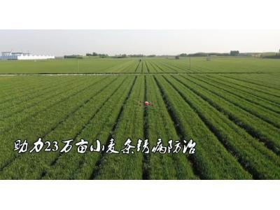 濟南長清:40架極飛植保無人機齊上陣 助力23萬畝小麥條銹病防治
