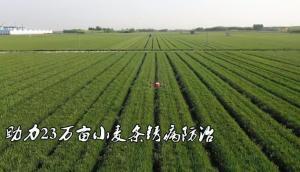 济南长清:40架极飞植保无人机齐上阵 助力23万亩小麦条锈病防治