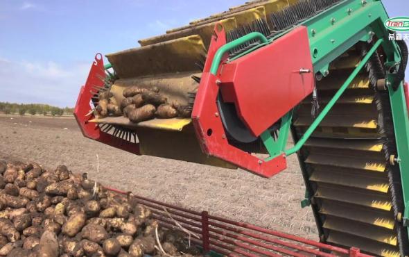希森天成马铃薯联合收获机作业视频