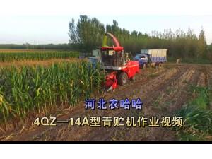 河北農哈哈4QZ-18A青飼料收獲機-作業視頻