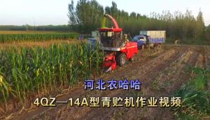 河北农哈哈4QZ-18A青饲料收获机-作业视频