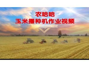 農哈哈玉米播種機-作業視頻