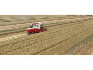 雷沃谷神4LZ-8E2(GE80)糧食含雜率偏高保養維護視頻