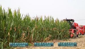 金達威4YZP-2C玉米收獲機現場演示