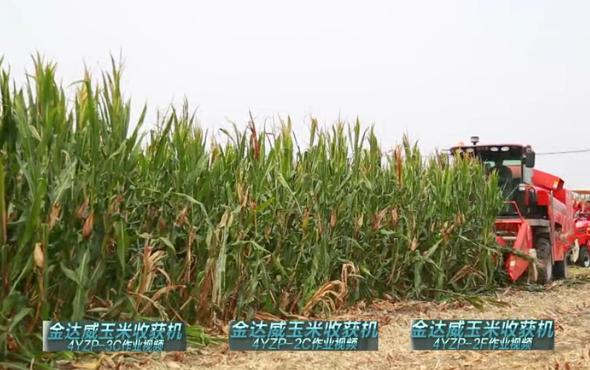 金达威4YZP-2C玉米收获机现场演示