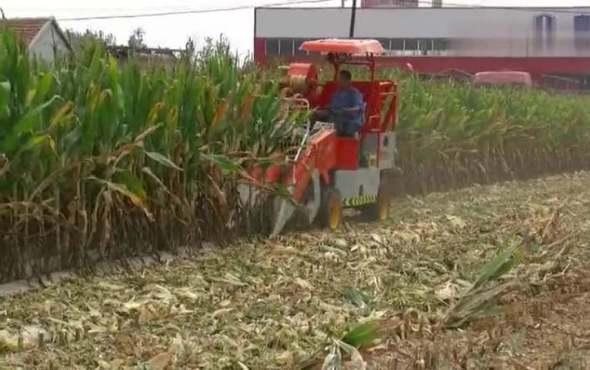 帝呈白龍牌4YZP-2A型自走式玉米收獲機作業視頻