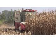 沃得皓龙轮式纵轴流机收玉米作业展示