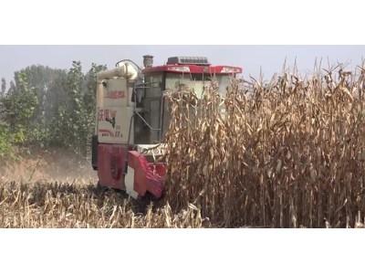 沃得皓龍輪式縱軸流機收玉米作業展示