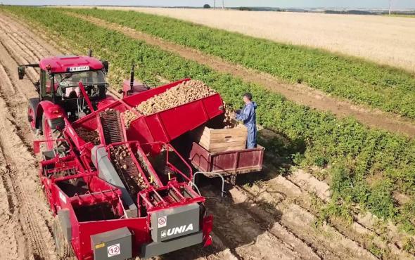 优尼亚马铃薯机械收获机BOLKO作业视频