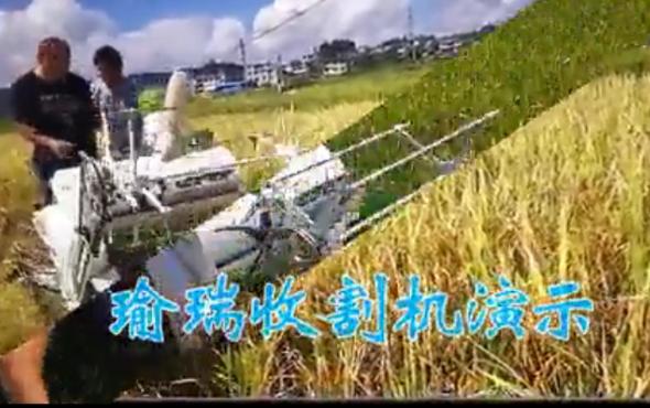 瑜欣电子-瑜瑞牌4LZ-0_9收割机-作业视频