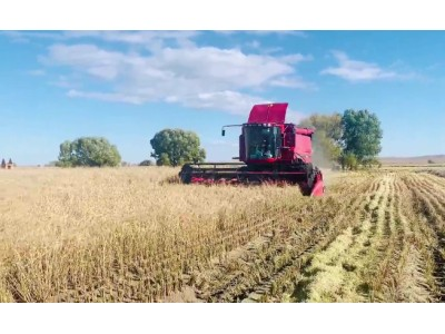 凯斯AF4088收割机水稻收割视频