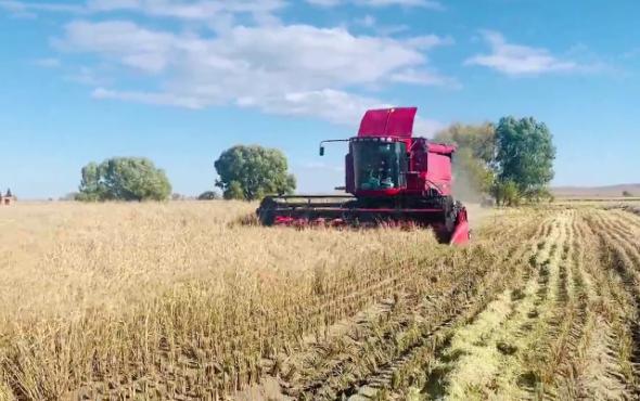 凱斯AF4088收割機水稻收割視頻