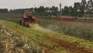 中州興發熱帶地區菠蘿葉粉碎還田機作業視頻