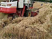]雷沃谷神GE50(4LZ-5E)小麦联合收割机