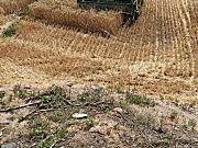 中联谷王TB60(4LZ-6B)型小麦收割机