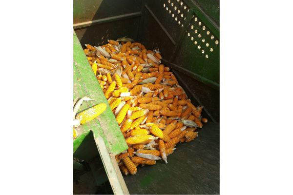 中国收获4YZ-4玉米收割机