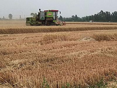 中国收获新疆-4谷物联合收割机