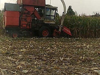 国丰茎穗兼收三行玉米收割机